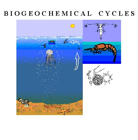 importance of biochemical cycles The importance of water treatment processes essay  the biochemical importance of water sam ellick 13/11/2010 water otherwise known as h2o is a.